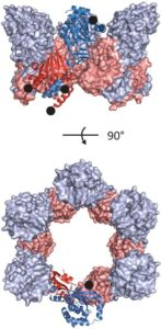 Abbildung der Kristallstruktur des pUL50-pUL53 Komplexes aus 2 um 90° gedrehten Blickrichtungen.